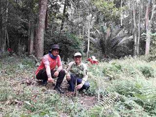 gerakan adopsi hutan melalui adopsi pohon